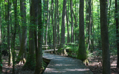 Family-Friendly Hikes, Trails, and Greenways in Madison
