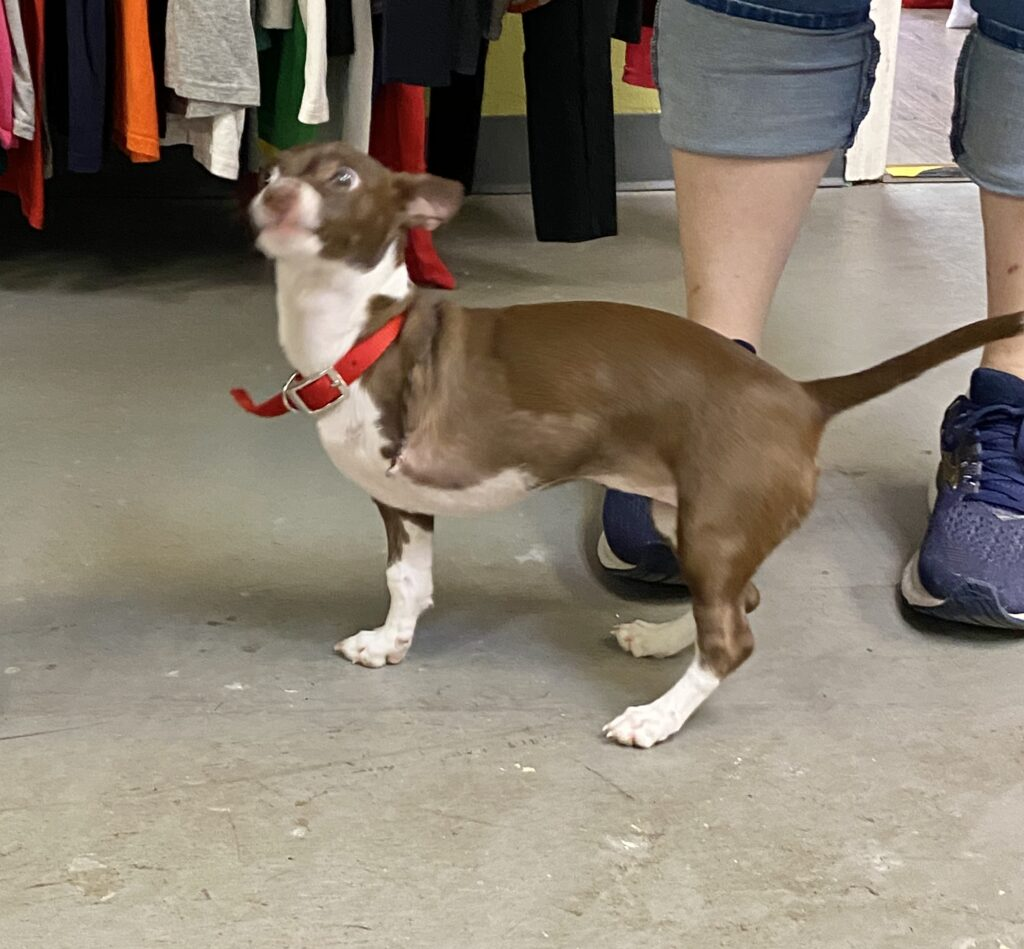 A New Leash on Life started in 2004 and expanded to Madison in 2019. This organization has two key elements that go hand-in-hand: the life-saving element and the thrift store element, which funnels all of its proceeds back into the life-saving side.