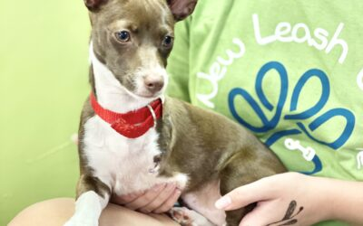 Behind the Scenes at A New Leash on Life Thrift Store and Rescue Center