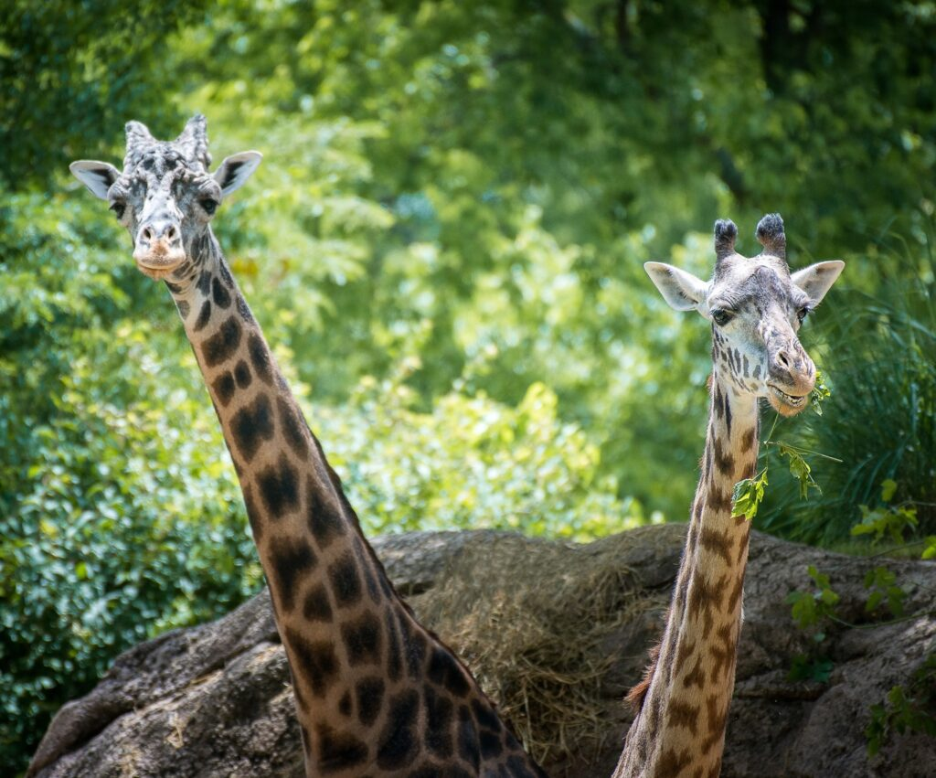 Day trips to zoos and aquariums from Madison, Alabama: Madison, Alabama isn't home to any zoos or aquariums, but residents of our community are fortunate to have a slew of day trip options to visit attractions like these semi-nearby.