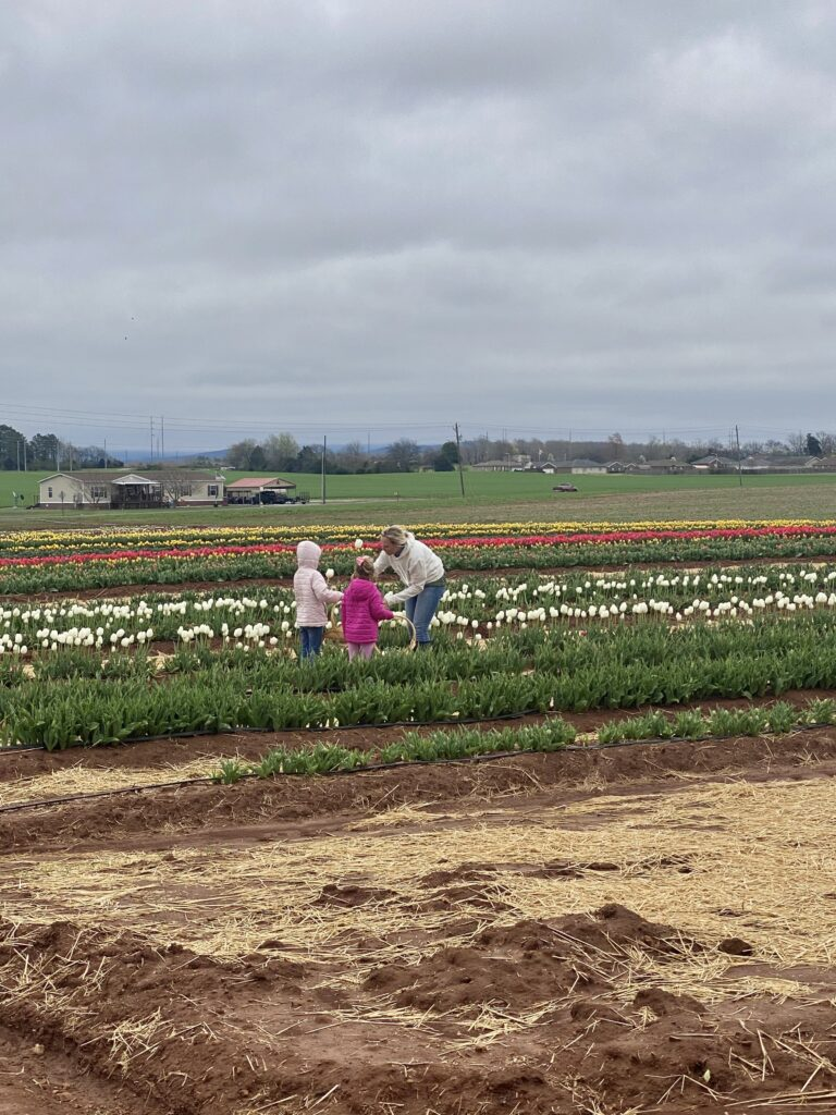 Hubert Family Farms | Tulips in North Alabama: Hubert Family Farms in New Market, Alabama features dozens of rows of tulips from March through April.