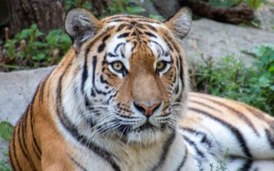 A Zoo For You, North Alabama! What to Expect, Site Maps, and More