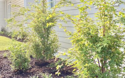 Indian Creek Landscaping Design Part Three: Before & After